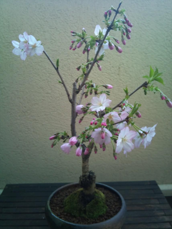 2011-04-06.jpg